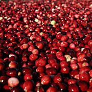 Le Cranberry