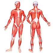Des Protéines pour prendre de la masse musculaire