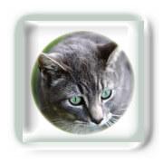 Blessures causées par un Chat
