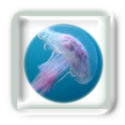 Les Piqûres de Méduse