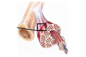 La musculation (thèse)