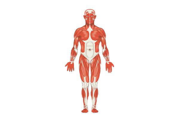 Protéines et prise de masse musculaire