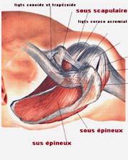 Pratique sportive et blessures de l'épaule
