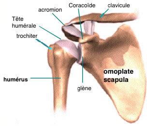 Clavicule : entorse acromio-claviculaire