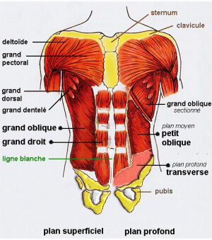 Pilates : description du caisson abdominal