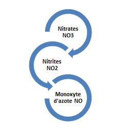 La transformation des nitrates