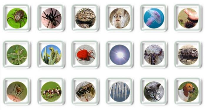 piq res d 39 insectes morsures griffures les premiers r flexes. Black Bedroom Furniture Sets. Home Design Ideas