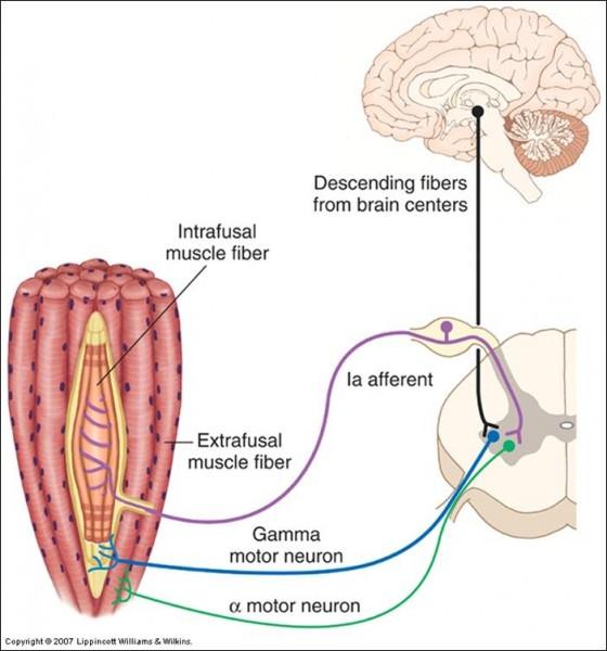 regulation-neurologique