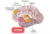 Cerveau et sport