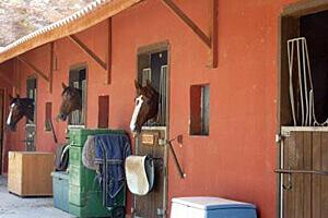 Mal de dos et sports équestres