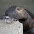 Leptospirose : prévention en milieu aquatique