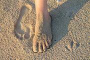 Morphologie du pied