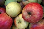 Pommes et sport